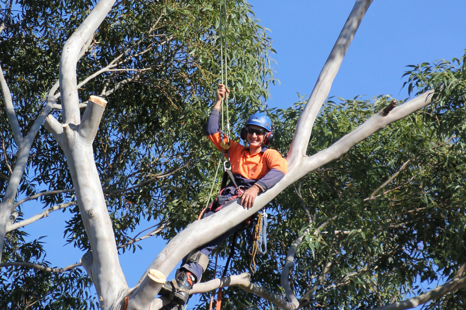 Above All Tree Services
